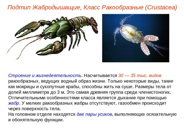 Строение и жизнедеятельность. Насчитывается 30 — 35 тыс. видов ракообразных, ведущих водный образ жизни. Только некоторые виды, такие как мокрицы и сухопутные крабы, способны жить на суше. Размеры тела от долей миллиметра до 3 м. Это самая древняя г…