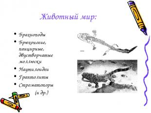 Животный мир: Брахиоподы Брюхоногие, панцирные, двустворчатые моллюски Наутилоид