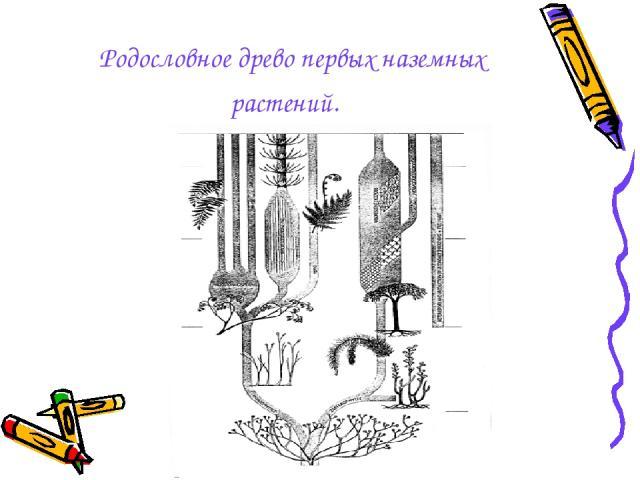 Родословное древо первых наземных растений.