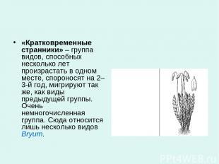 «Кратковременные странники»– группа видов, способных несколько лет произрастать
