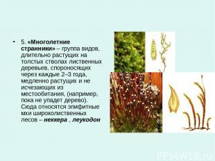 5.«Многолетние странники»– группа видов, длительно растущих на толстых стволах