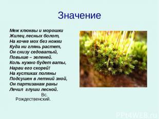 Значение Меж клюквы и морошки Жилец лесных болот, На кочке мох без ножки Куда ни