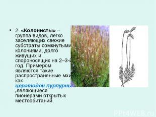 2.«Колонисты»– группа видов, легко заселяющих свежие субстраты сомкнутыми коло