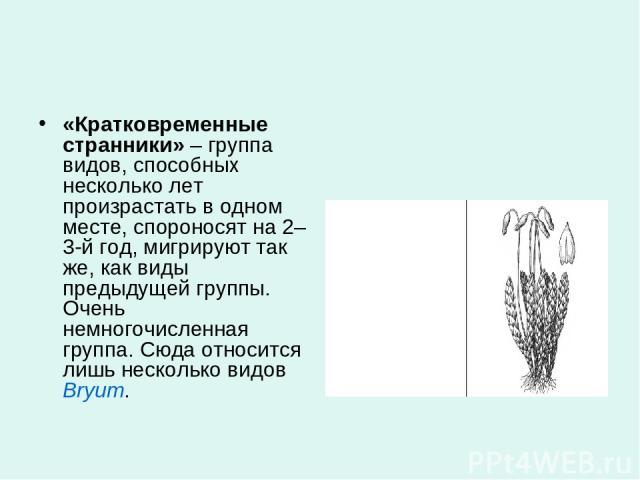«Кратковременные странники»– группа видов, способных несколько лет произрастать в одном месте, спороносят на 2–3-й год, мигрируют так же, как виды предыдущей группы. Очень немногочисленная группа. Сюда относится лишь несколько видовBryum.