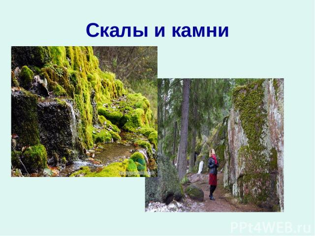 Скалы и камни