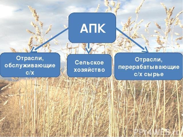 Сельское хозяйство Отрасли, перерабатывающие с/х сырье Отрасли, обслуживающие с/х АПК