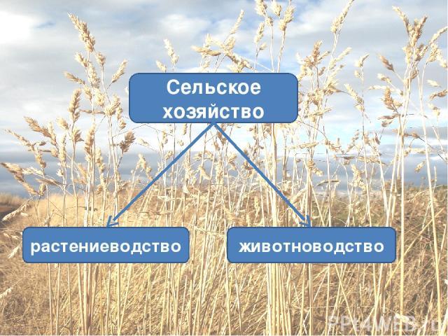 животноводство растениеводство Сельское хозяйство