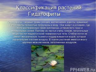 Классификация растений Гидатофиты Гидатофиты – водные травы (элодея, валлиснерия