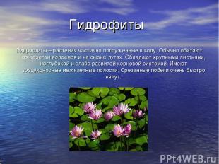 Гидрофиты Гидрофиты – растения частично погруженные в воду. Обычно обитают по бе