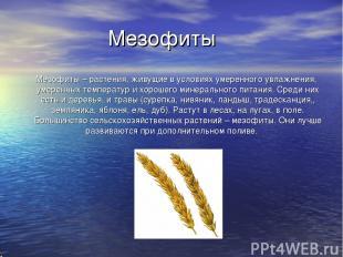 Мезофиты Мезофиты – растения, живущие в условиях умеренного увлажнения, умеренны