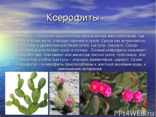 Ксерофиты Ксерофиты – растения недостаточно увлажненных местообитаний, где воды