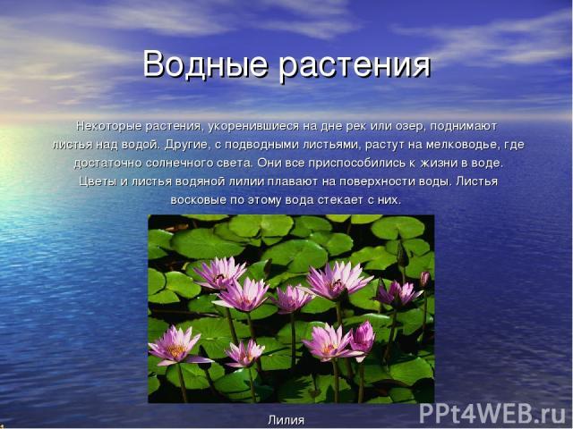 Водные растения Некоторые растения, укоренившиеся на дне рек или озер, поднимают листья над водой. Другие, с подводными листьями, растут на мелководье, где достаточно солнечного света. Они все приспособились к жизни в воде. Цветы и листья водяной ли…
