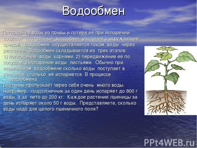 Водообмен Поглощение воды из почвы и потеря её при испарении создают постоянный водообмен растения с окружающей средой. Водообмен осуществляется током воды через растение. Водообмен складывается из трех этапов: 1) поглощение воды корнями, 2) передви…