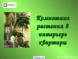 Комнатные растения в интерьере квартиры 900igr.net