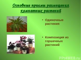 Основные приемы размещения комнатных растений Одиночные растения Композиция из г