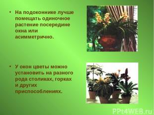 На подоконнике лучше помещать одиночное растение посередине окна или асимметричн