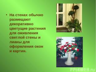 На стенах обычно размещают декоративно цветущие растения для оживления светлой с