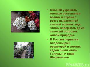 Обычай украшать жилище растениями возник в стране с резко выраженной сменой врем