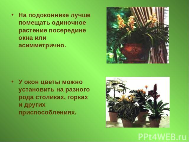 На подоконнике лучше помещать одиночное растение посередине окна или асимметрично. У окон цветы можно установить на разного рода столиках, горках и других приспособлениях.