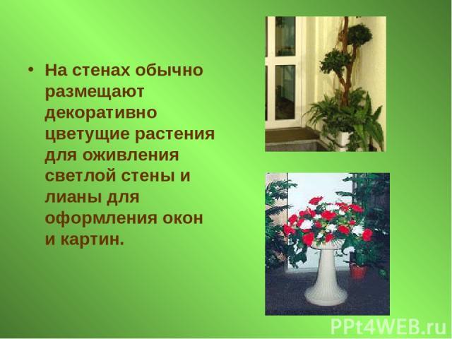 На стенах обычно размещают декоративно цветущие растения для оживления светлой стены и лианы для оформления окон и картин.