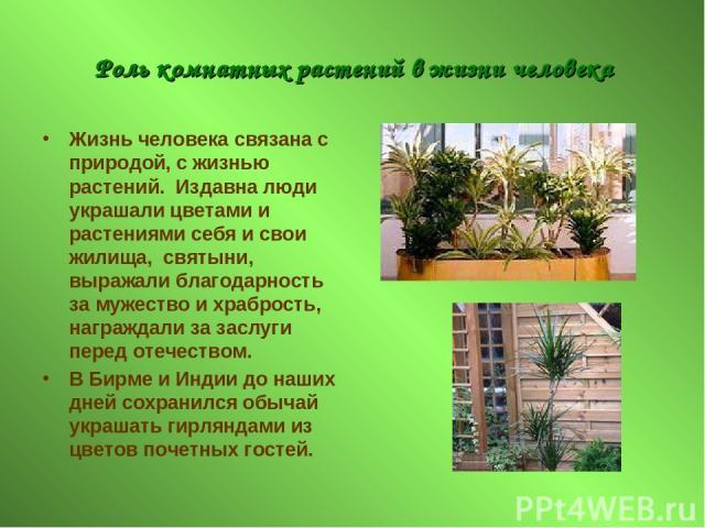 Роль комнатных растений в жизни человека Жизнь человека связана с природой, с жизнью растений. Издавна люди украшали цветами и растениями себя и свои жилища, святыни, выражали благодарность за мужество и храбрость, награждали за заслуги перед отечес…