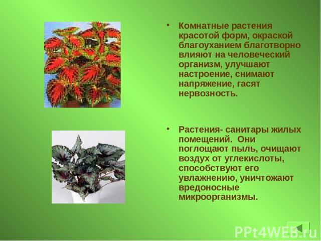 Комнатные растения красотой форм, окраской благоуханием благотворно влияют на человеческий организм, улучшают настроение, снимают напряжение, гасят нервозность. Растения- санитары жилых помещений. Они поглощают пыль, очищают воздух от углекислоты, с…