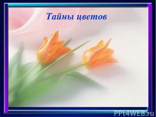 Тайны цветов