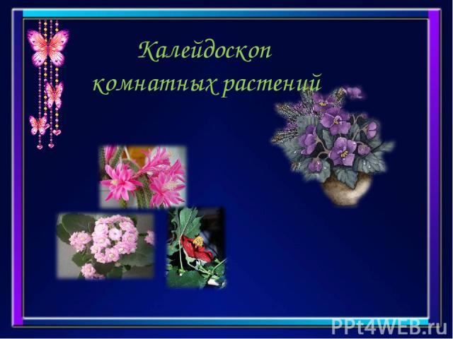 Калейдоскоп комнатных растений