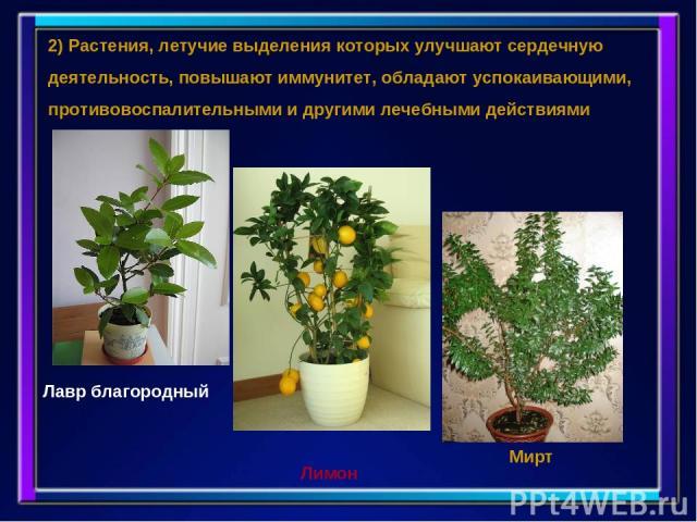 2) Растения, летучие выделения которых улучшают сердечную деятельность, повышают иммунитет, обладают успокаивающими, противовоспалительными и другими лечебными действиями Лавр благородный Лимон Мирт