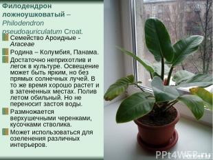 Филодендрон ложноушковатый – Philodendron pseudoauriculatum Croat. Семейство Аро