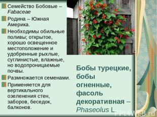Бобы турецкие, бобы огненные, фасоль декоративная – Phaseolus L. Семейство Бобов