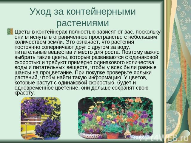 Уход за контейнерными растениями Цветы в контейнерах полностью зависят от вас, поскольку они втиснуты в ограниченное пространство с небольшим количеством земли. Это означает, что растения постоянно соперничают друг с другом за воду, питательные веще…