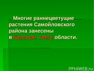Многие раннецветущие растения Самойловского района занесены в Красную книгу обла