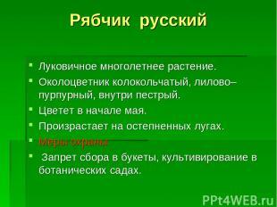 Рябчик русский Луковичное многолетнее растение. Околоцветник колокольчатый, лило