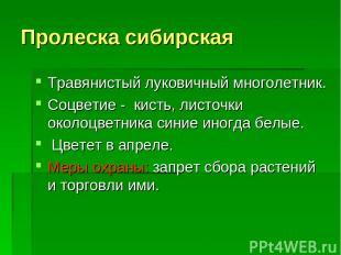 Пролеска сибирская Травянистый луковичный многолетник. Соцветие - кисть, листочк