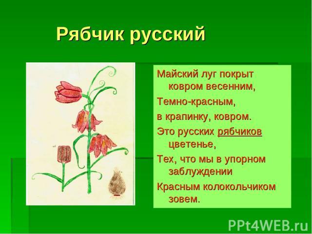 Рябчик русский Майский луг покрыт ковром весенним, Темно-красным, в крапинку, ковром. Это русских рябчиков цветенье, Тех, что мы в упорном заблуждении Красным колокольчиком зовем.