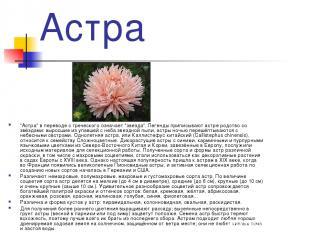 """Астра """"Астра"""" в переводе с греческого означает """"звезда"""". Легенды приписывают аст"""