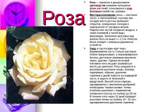 Роза Роза— принятое в декоративном цветоводстве название культурных форм растен
