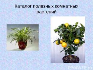 Каталог полезных комнатных растений
