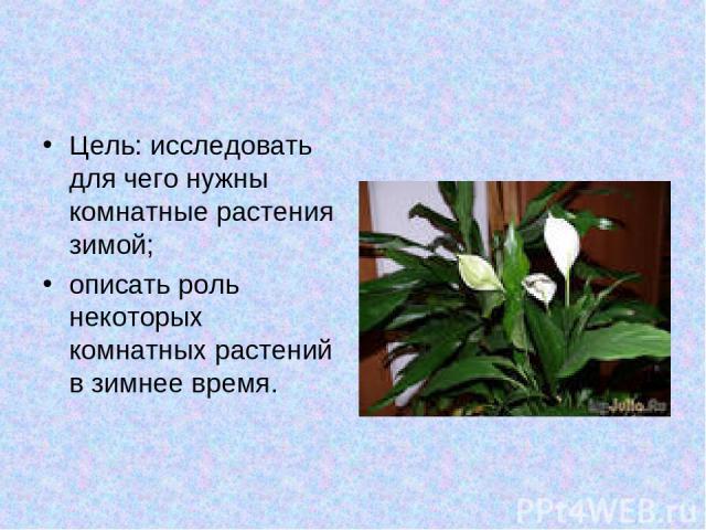 Цель: исследовать для чего нужны комнатные растения зимой; описать роль некоторых комнатных растений в зимнее время.