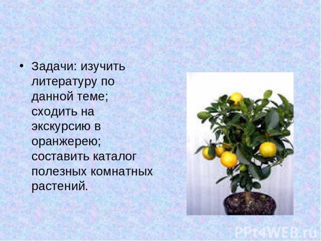 Задачи: изучить литературу по данной теме; сходить на экскурсию в оранжерею; составить каталог полезных комнатных растений.