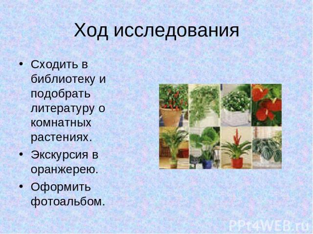 Ход исследования Сходить в библиотеку и подобрать литературу о комнатных растениях. Экскурсия в оранжерею. Оформить фотоальбом.