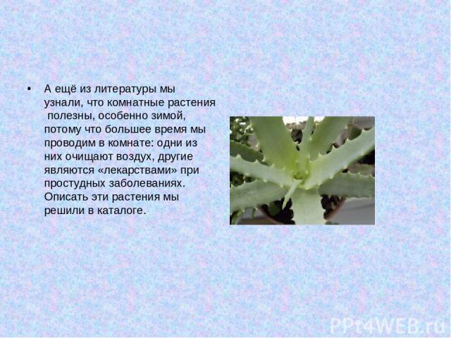 А ещё из литературы мы узнали, что комнатные растения полезны, особенно зимой, потому что большее время мы проводим в комнате: одни из них очищают воздух, другие являются «лекарствами» при простудных заболеваниях. Описать эти растения мы решили в ка…