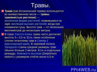 Травы. Трава (как ботанический термин используется во множественном числе— тра
