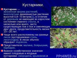 Кустарники. Кустарник— жизненная форма растений; многолетние деревянистые расте