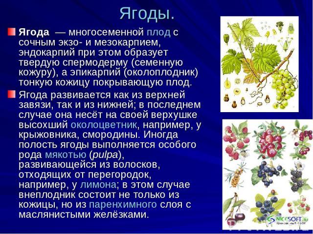 Ягоды. Ягода — многосеменной плод с сочным экзо- и мезокарпием, эндокарпий при этом образует твердую спермодерму (семенную кожуру), а эпикарпий (околоплодник) тонкую кожицу покрывающую плод. Ягода развивается как из верхней завязи, так и из нижней;…