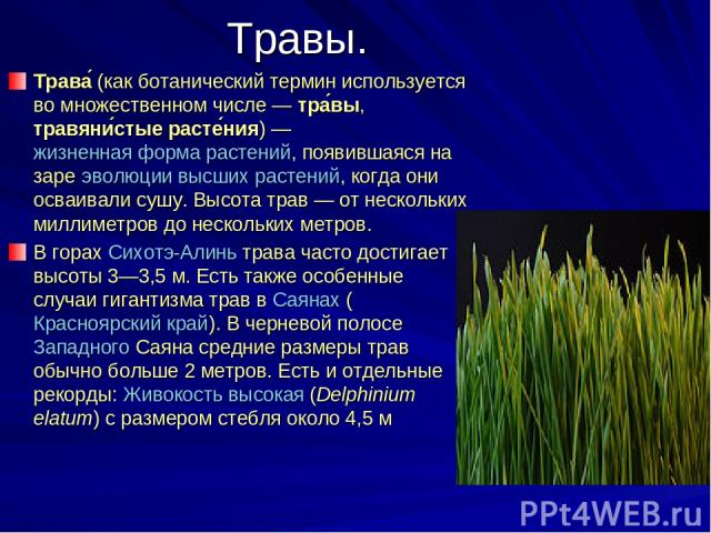 Травы. Трава (как ботанический термин используется во множественном числе— тра вы, травяни стые расте ния)— жизненная форма растений, появившаяся на заре эволюции высших растений, когда они осваивали сушу. Высота трав— от нескольких миллиметров д…