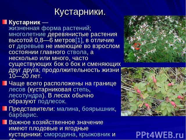 Кустарники. Кустарник— жизненная форма растений; многолетние деревянистые растения высотой 0,8—6 метров[1], в отличие от деревьев не имеющие во взрослом состоянии главного ствола, а несколько или много, часто существующих бок о бок и сменяющих друг…