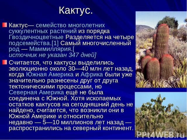 Кактус. Кактус— семейство многолетних суккулентных растений из порядка Гвоздичноцветные Разделяется на четыре подсемейства.[1] Самый многочисленный род— Маммиллярия.[источникнеуказан347дней] Считается, что кактусы выделились эволюционно около 3…