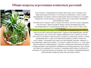 Общие вопросы агротехники комнатных растений Для успешного выращивания растений